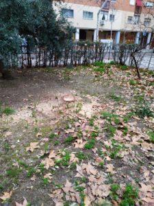 ¿Cada vez menos árboles? Que se repongan los árboles talados y que se mejore el mantenimiento de los existentes